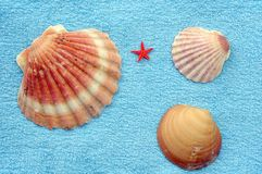 Shells and starfish. Three seashells and small red starfish on blue towel Royalty Free Stock Images