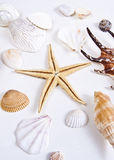 Shells and Starfish Stock Photo