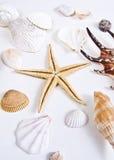 Shells and Starfish. Lot of Shells and Starfish.  on white Stock Photo