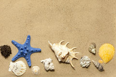 Shells and starfish on beach on sand Royalty Free Stock Images