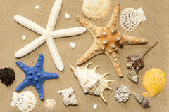 Shells and starfish on beach on sand Royalty Free Stock Image