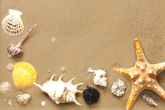 Shells and starfish on beach on sand Stock Photography
