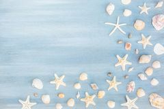 Summer Shells Blue Wood Background,free space. Shells and starfish on a light blue wood background stock photos