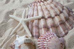 Shells and starfish in sand stock photography