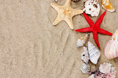shells and starfish on sand Royalty Free Stock Photo