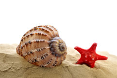Shells with starfish Stock Image