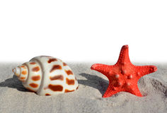 Shells with starfish Royalty Free Stock Image