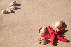 Shells and starfish Royalty Free Stock Image