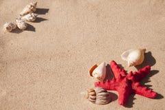 Shells and starfish Royalty Free Stock Image