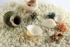 Shells and starfish Stock Photos
