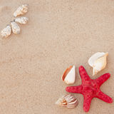 Shells and starfish Royalty Free Stock Images