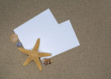 Shells and starfish on a sandy Royalty Free Stock Image