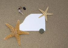 Shells and starfish on a sandy Stock Photos