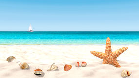 Shells and starfish on a sandy beach. With a blurred background in order to focus on the foreground. Copy space available Stock Photo