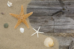 Shells and starfish on a sandy Stock Photography