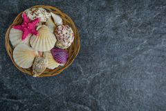 Shells and starfish on a stone cold background Royalty Free Stock Photo