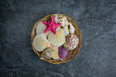Shells and starfish on a stone cold background Royalty Free Stock Image
