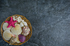 Shells and starfish on a stone cold background.  Stock Photography