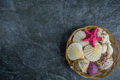 Shells and starfish on a stone cold background Stock Photography