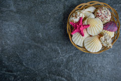 Shells and starfish on a stone cold background.  Royalty Free Stock Photos