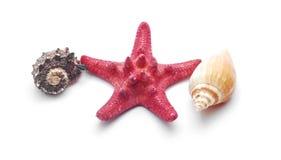 Shells Royalty Free Stock Photo