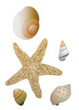 Shells and Starfish Royalty Free Stock Photography