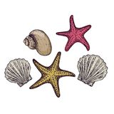 Beach summer holidays. Shells and starfish on white background, cartoon illustration. Vector Stock Photo