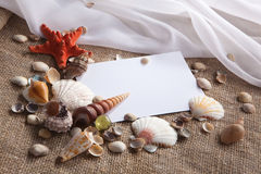 Shells and starfish with white paper royalty free stock photography