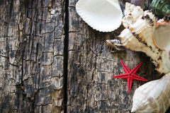 Shells and starfish on wooden table Selective Focus Royalty Free Stock Photos