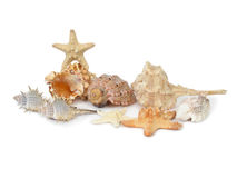 Shells and starfishes. A composition made from several shells and starfishes isolated on white background Royalty Free Stock Images