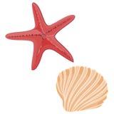 Shells and starfishes. Aquatic animals shellfish Stock Image