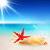 Shells and starfishes on the beach Royalty Free Stock Photo