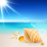 Shells and starfishes on the beach Royalty Free Stock Photography