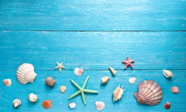 Shells and starfishes Stock Images