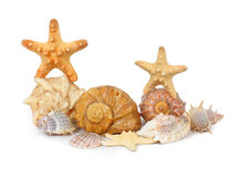 Shells and starfishes isolated on white. Several shells and starfishes with two starfishes on top isolated on a white background royalty free stock photos
