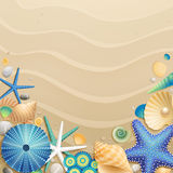 Shells and starfishes on sand background Royalty Free Stock Images