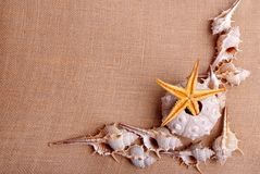 Shells and starfishes on sand background Stock Photos