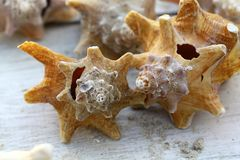 Shells, stars of the day Royalty Free Stock Photography