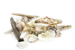 Shells still life. Still life of different shells shot on white background Royalty Free Stock Photo
