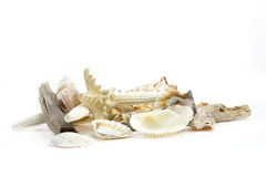 Shells still life. Still life of different shells shot on white background Stock Photography