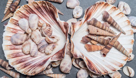Shells on the stone Stock Photos