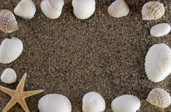 Shells and stones Stock Photography