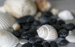 Shells and stones Royalty Free Stock Photography