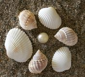 Shells and stones. Good shells, stones and pearl on sea sand Royalty Free Stock Photos