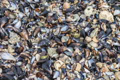 Shells and stones on the beach Stock Photography