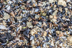Shells and stones on the beach Stock Photo