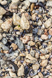Shells and stones on the beach Stock Photos