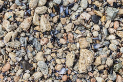 Shells and stones on the beach Royalty Free Stock Photo