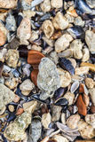 Shells and stones on the beach Royalty Free Stock Photos
