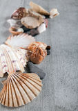 Shells, stones and desert rose Royalty Free Stock Image
